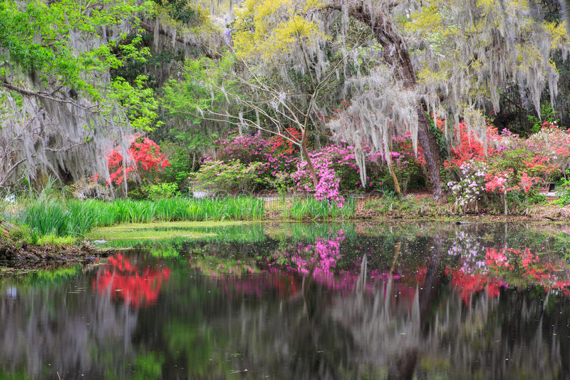 Colorful Southern Garden in Bloom. Colorful southern garden under oak trees with hanging moss is reflecting in the water of adjacent pond at plantation in royalty free stock photos