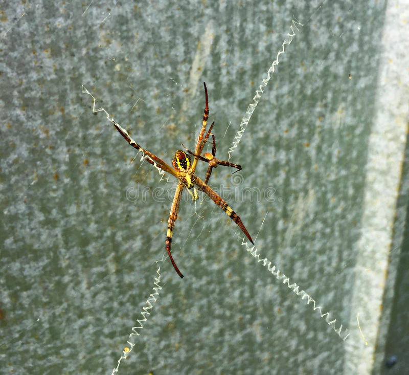 Colorful spiders in web royalty free stock photo