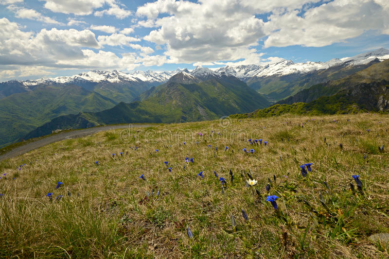 Download Colorful Spring In The Alps Stock Image - Image: 31368657