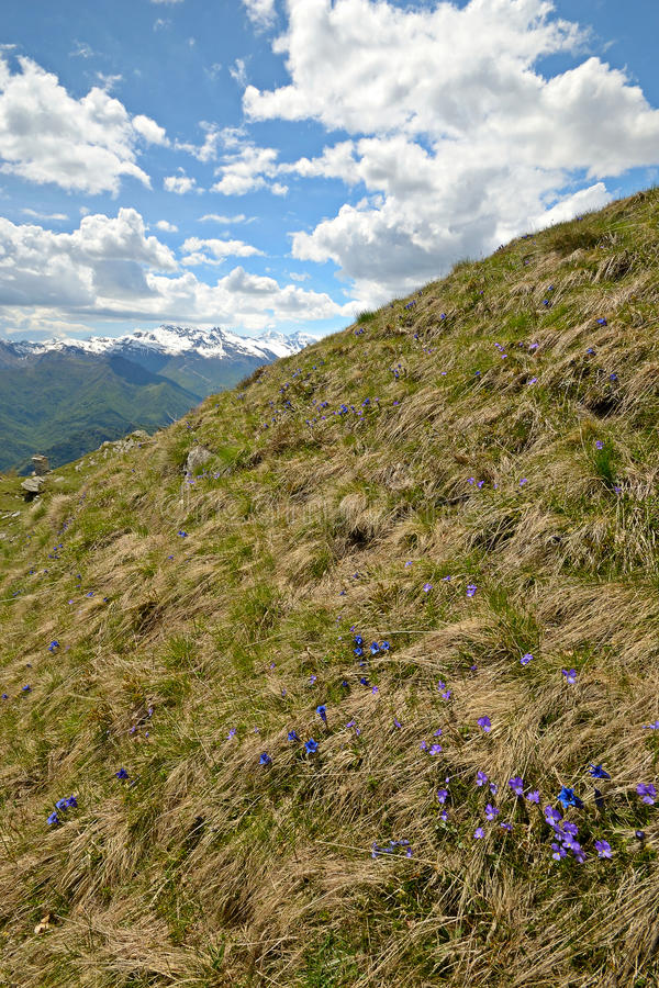 Download Colorful Spring In The Alps Stock Image - Image: 31368631