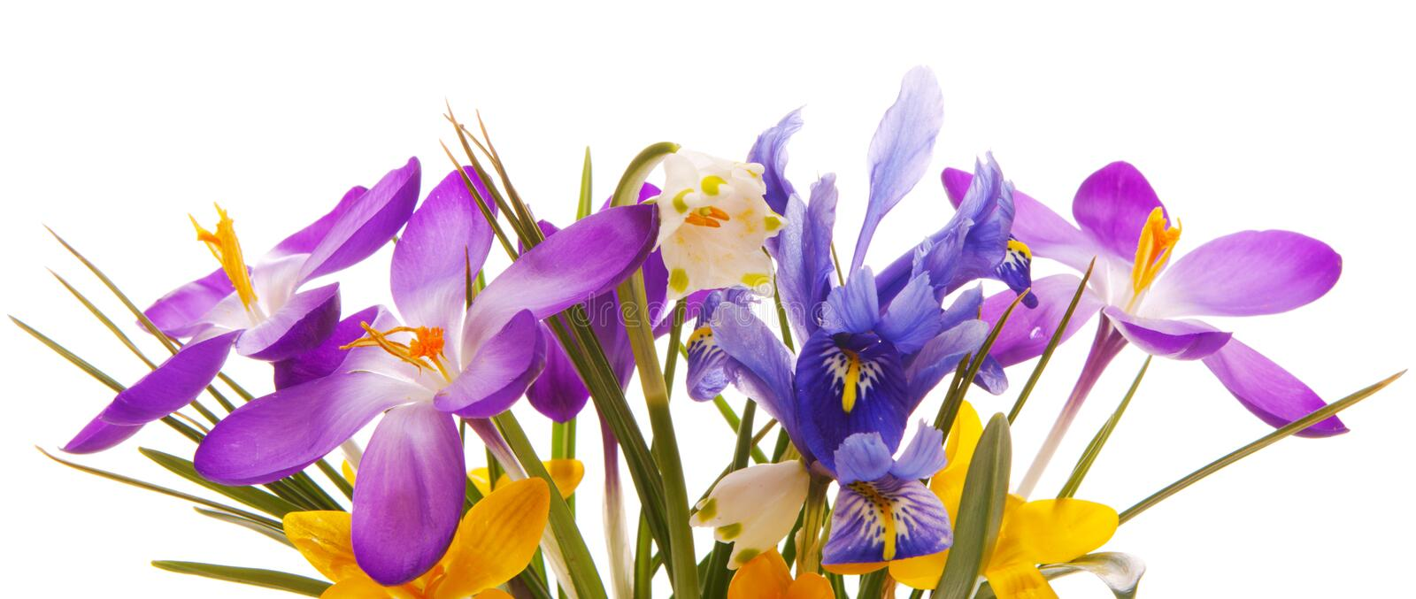Colorful spring flowers isolated . stock photos