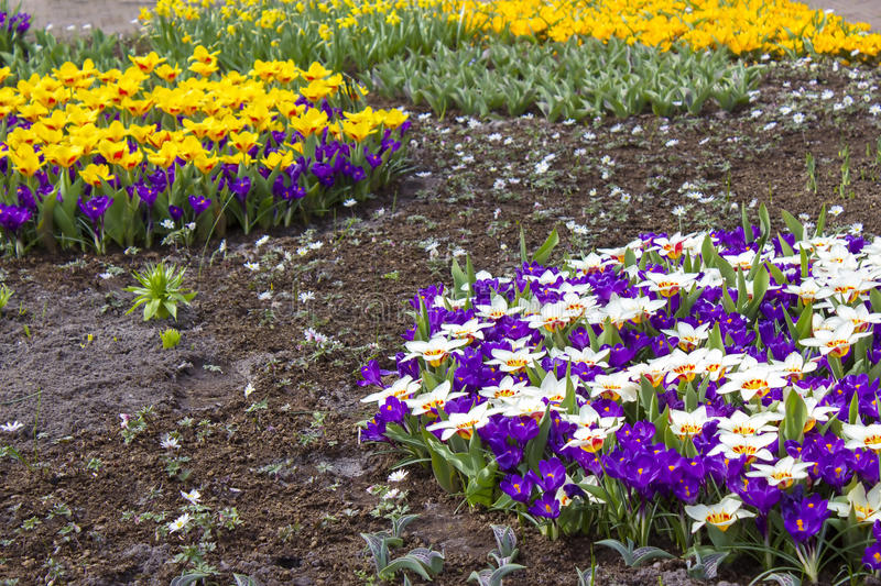 Colorful spring flowers in the park stock photos