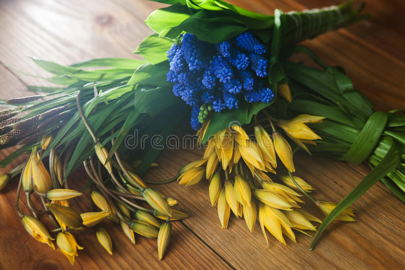 Colorful spring flowers top view closeup stock images