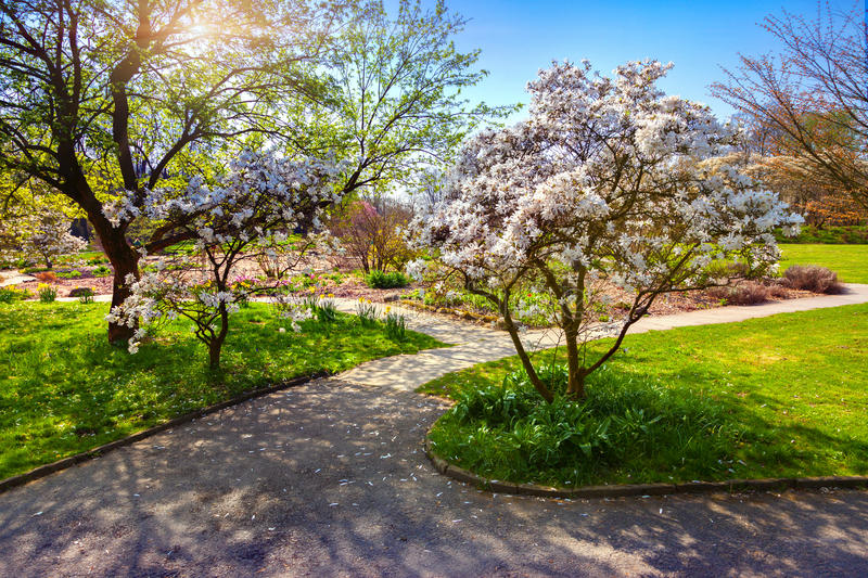 Colorful spring sunrise in the botanical garden of Essen town. Beautiful outdoor scenery in German, Europe stock images