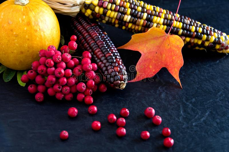 Colorful Squash, Red Maple Leaves, Red Berries on Black Background for Thanksgiving royalty free stock photography