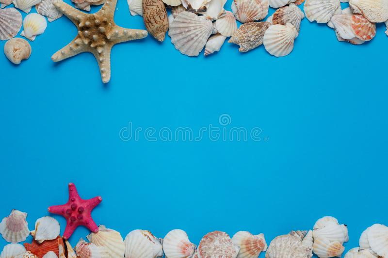 Colorful Starfish Ocean Seashell Nature Collection. Exotic Sea Conch Decorative Composition Summer Voyage Concept Azure Background. Seashore Clam Pattern stock photo