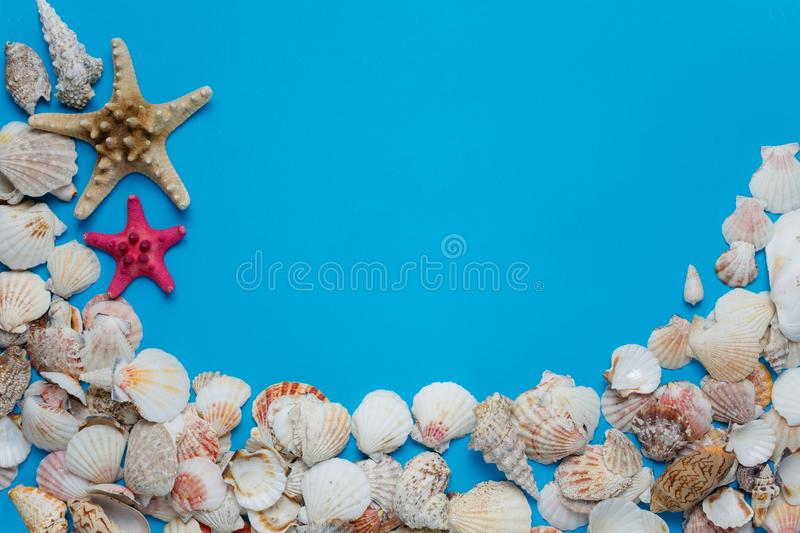 Colorful Starfish Ocean Seashell Nature Collection. Exotic Sea Conch Decorative Composition Summer Voyage Concept Azure Background. Seashore Clam Pattern royalty free stock image