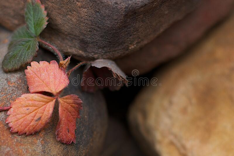 Colorful Strawberry Leaves royalty free stock photos