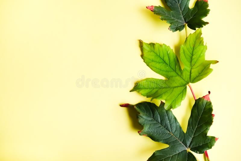 Colorful summer and autumn leaves stock photo
