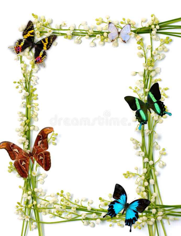 Colorful Summer Frame With Butterflies. Lilies of the valley frames with colorful butterflies on white background royalty free stock photography