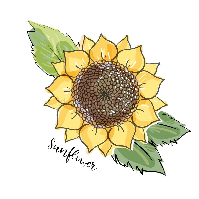 Colorful summer sketch, watercolor, marker copic imitaton style. Bright and blurred sunflower with leaves. Lettering inscription vector illustration