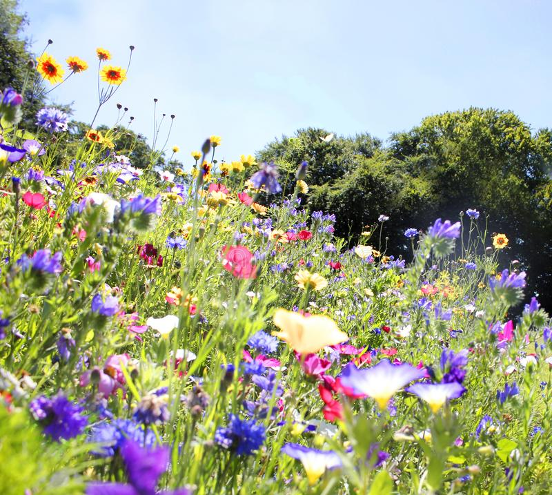 Colorful summer wildflower meadow stock photography