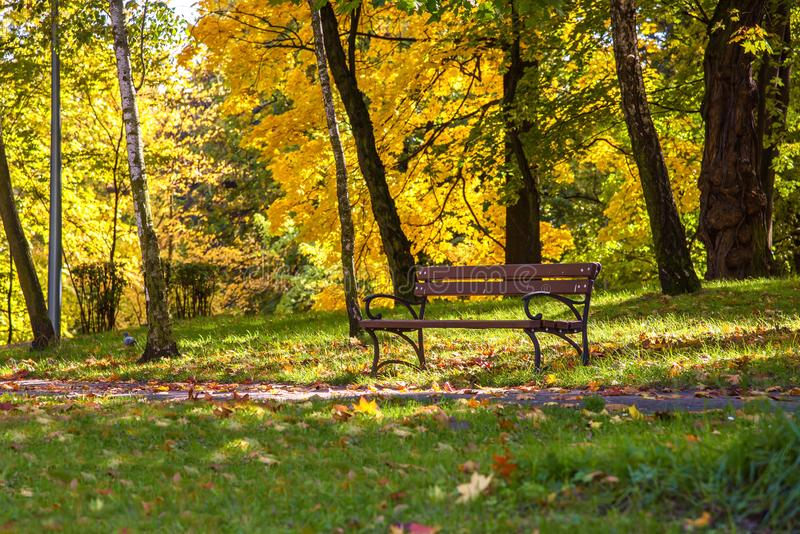 Colorful sunny autumn in a park royalty free stock images