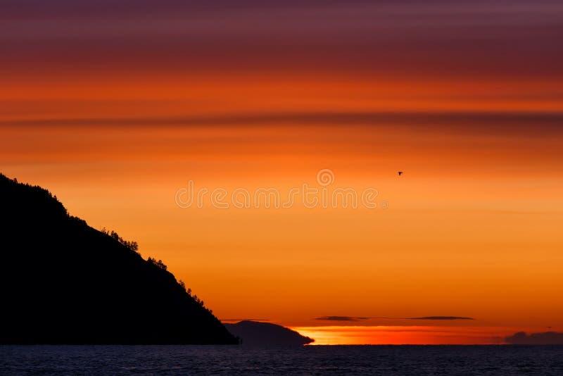 Colorful sunrise at Baikal lake with flying bird stock photo