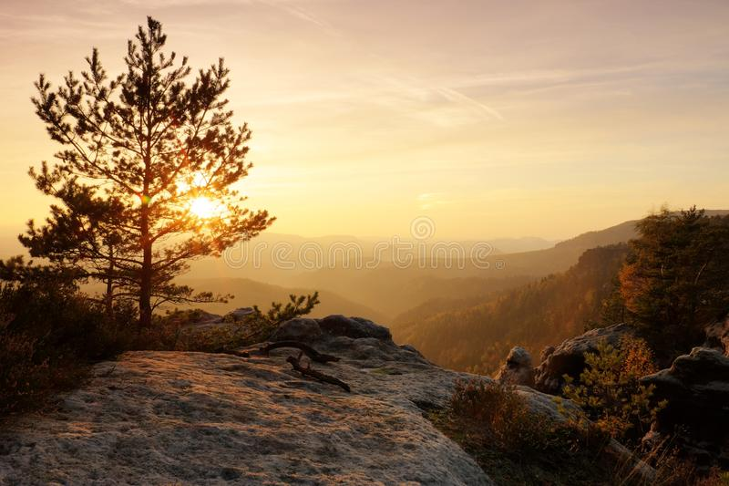 Colorful sunset in a beautiful autumn rocky park. Bended trees on peaks above deep valley. Evening orange sun rays. royalty free stock images