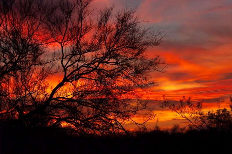 An colorful sunset behind a silhouetted mesquite tree. An intensely colorful sunset behind a silhouetted mesquite tree in the Sonoran desert of Arizona stock photography
