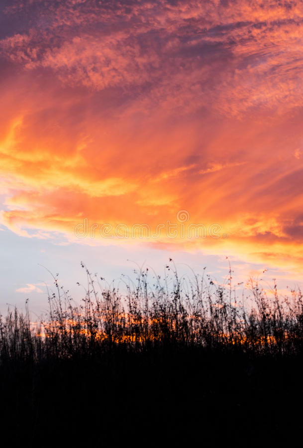 Download Colorful Sunset Over Field Grasses. Stock Photo - Image: 83713744