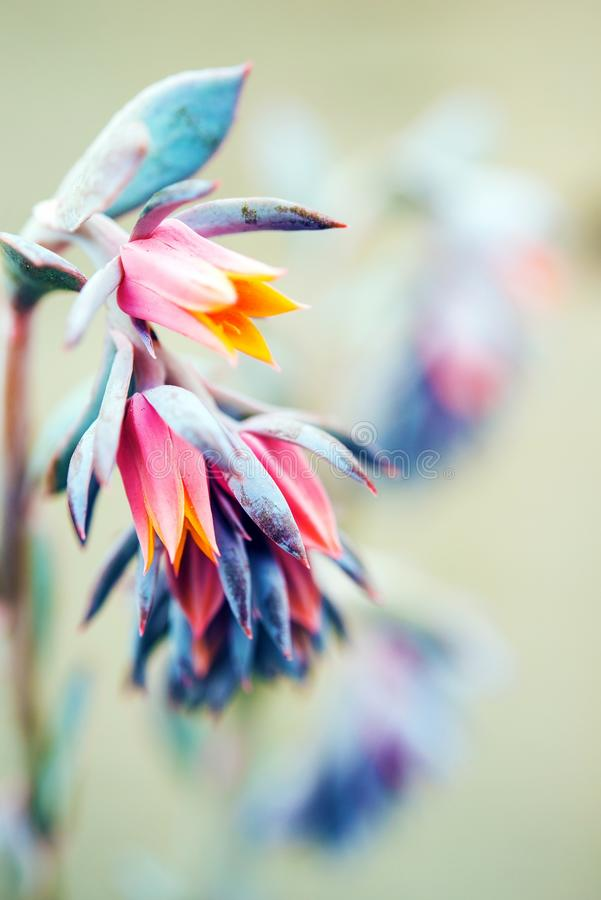 Colorful Tiny Flowers. In Macro Photography. Botanic Theme stock photo