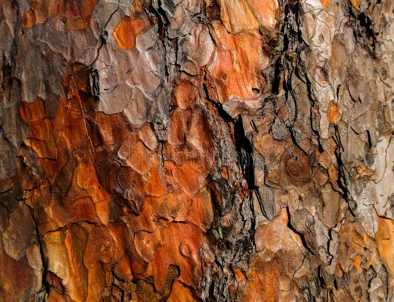 Colorful tree bark texture like an artistic abstract painting stock image