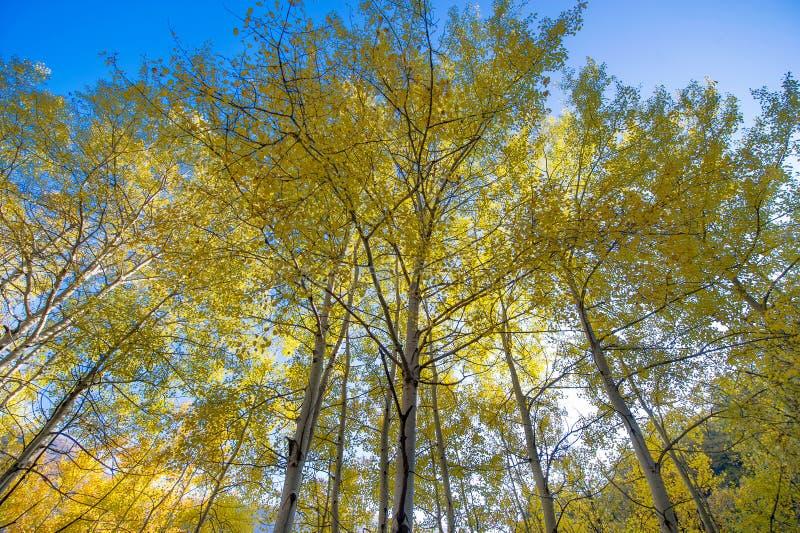 Autumn tree canopy royalty free stock photography