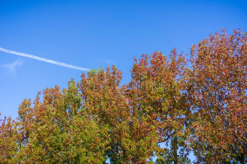 Colorful tree crowns dressed in autumn colors on a blue sky background, California royalty free stock photo