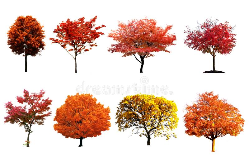 Colorful Tree set isolated on white background. stock photography