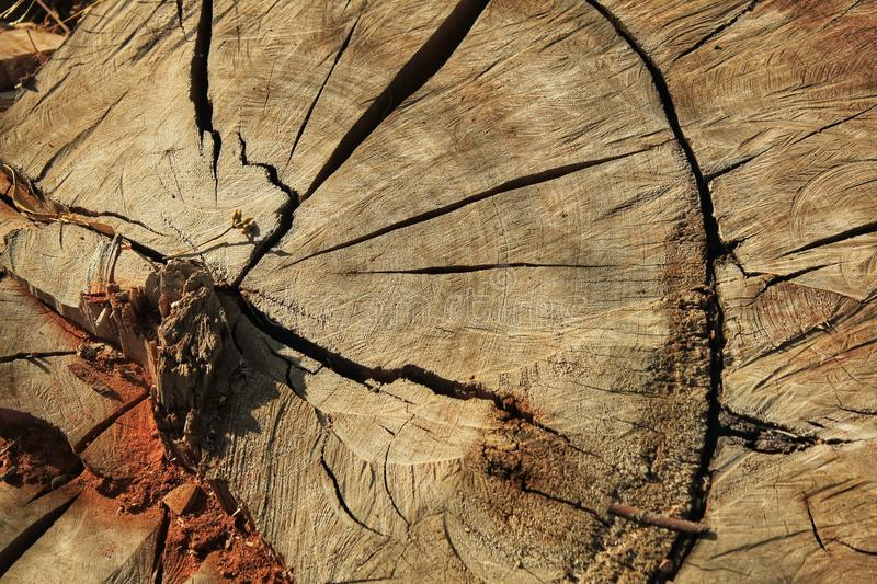 Colorful tree trunk texture. stock photography