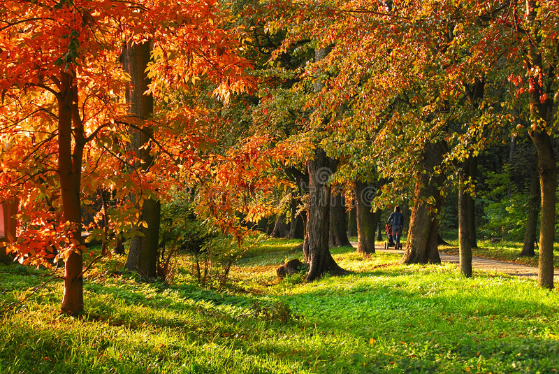 Colorful trees royalty free stock images