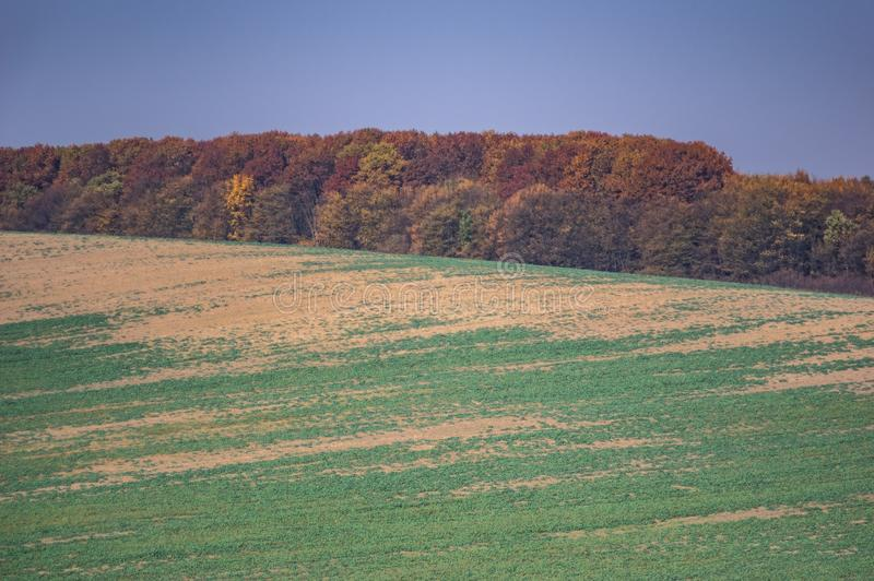Colorful trees in the autumn forest. In Ukraine royalty free stock photos