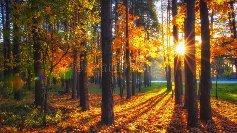 Colorful trees in autumn forest in sunlight. Fall nature in park royalty free stock photo