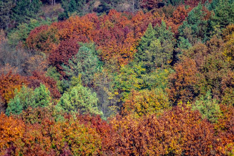 Colorful trees in the autumn forest. In Ukraine stock photo