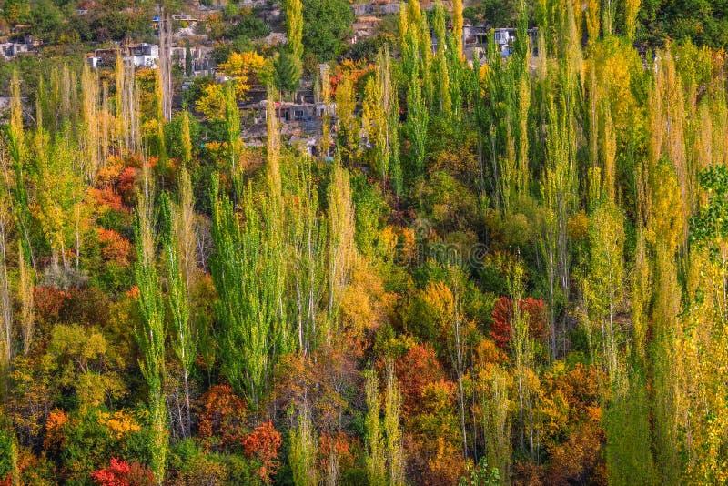 Colorful trees in autumn. Karimabad, Hunza valley. Colorful trees in autumn. Karimabad, Hunza valley, Gilgit-Baltistan, Pakistan stock photos