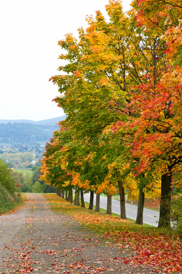 Colorful trees in autumn. A row of colorful trees in autumn stock photography