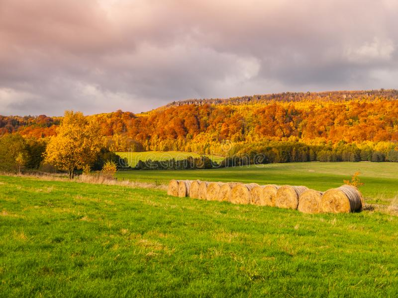 Colorful trees of autumnal landscape. Natural outdoor photography.  stock photography