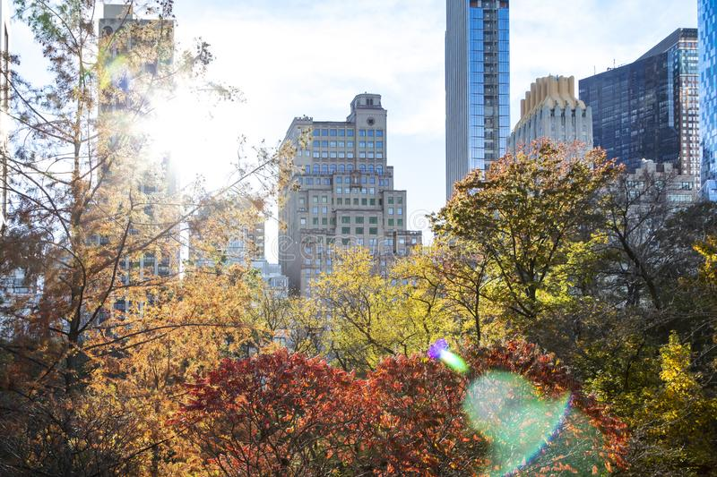 Colorful trees of Central Park in fall with the skyline buildings in New York City stock images