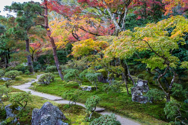 Colorful trees inside tropical park in Japan. Colorful trees changing color in autumn inside tropical park, Kyoto, Japan royalty free stock photography