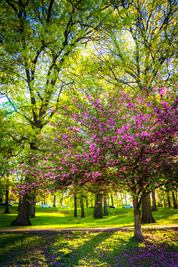 Colorful trees in Druid Hill Park, Baltimore, Maryland. Colorful trees in Druid Hill Park, Baltimore, Maryland royalty free stock photography