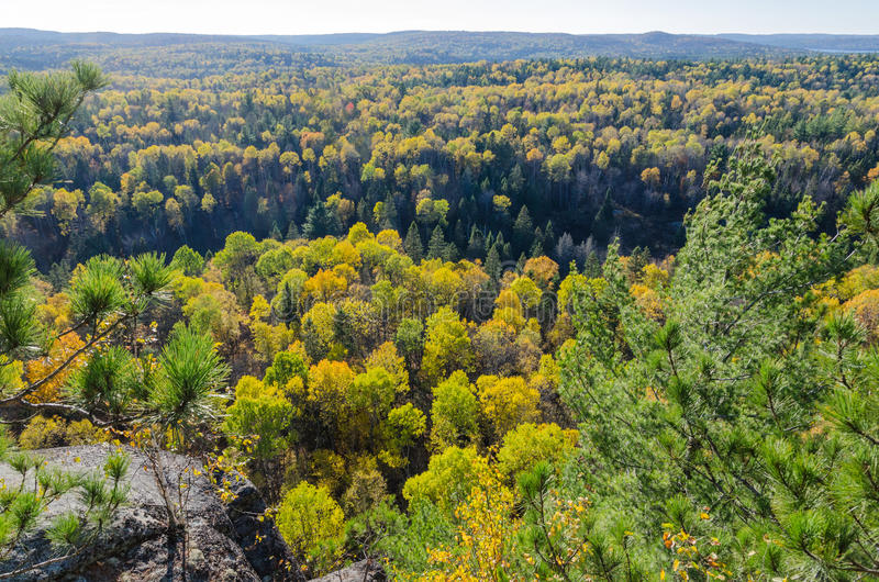 Colorful trees. Fall colorful trees in Algonquin park . Ontario, Canada royalty free stock images