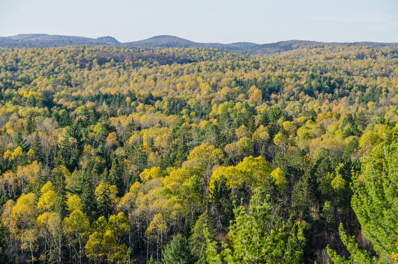 Colorful trees. Fall colorful trees in Algonquin park . Ontario, Canada stock photos