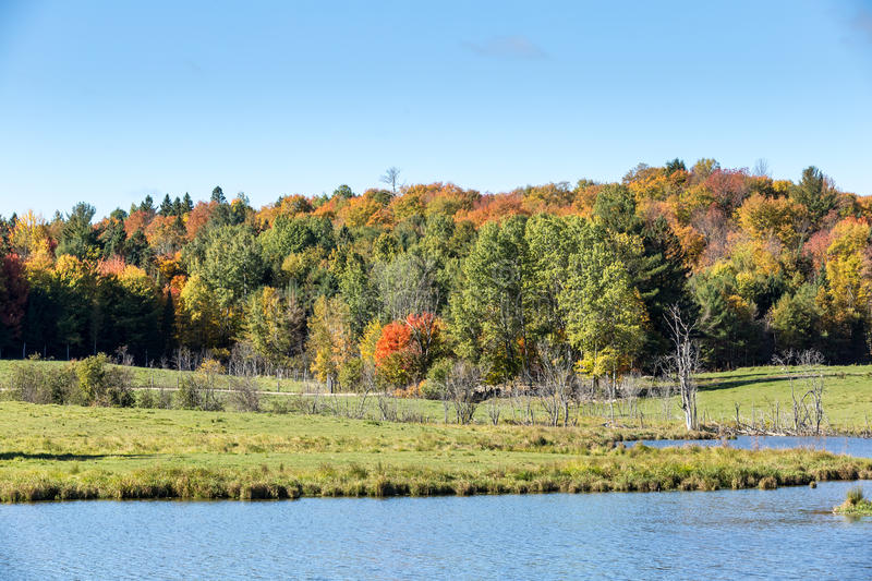 Colorful trees in a fall forest. In North America royalty free stock photography