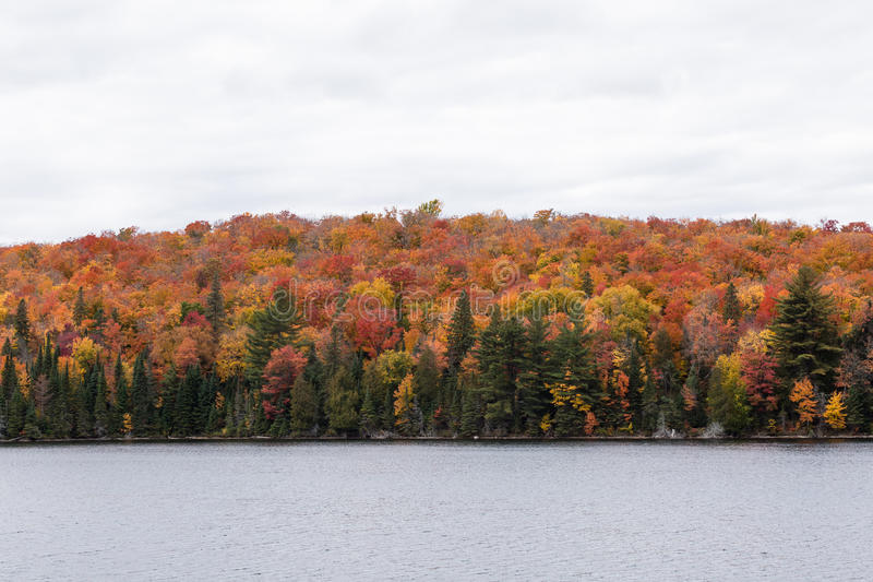 Colorful trees in a fall forest. In North America stock photography