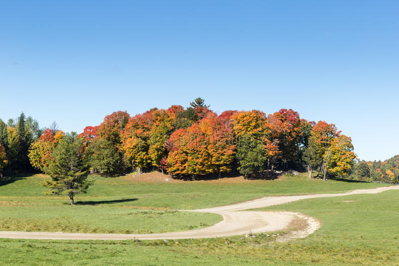 Colorful trees in a fall forest. In North America stock photo