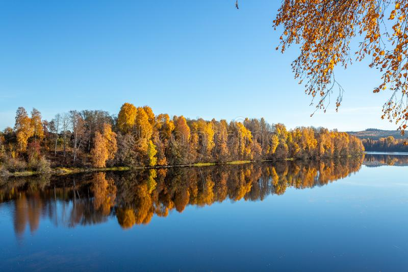 Colorful trees by lake in fall. Yellow trees in autumn reflecting in the river with a clear blue sky royalty free stock photography