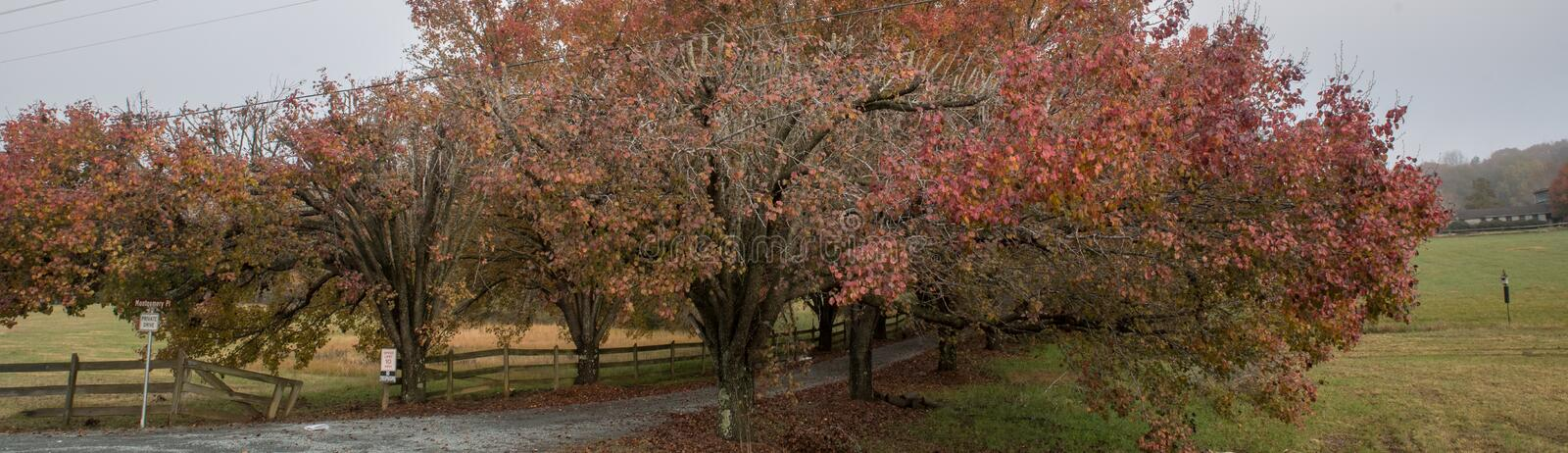 Colorful trees lining coutry lane. Colorful trees and wooden fence lining coutry lane royalty free stock images