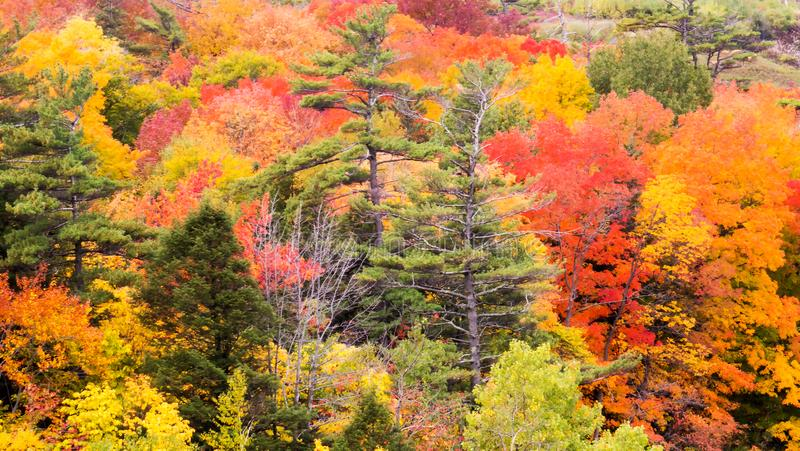 Colorful trees from a peaceful Provincial Park. During autumn 2018 in the Province of Quebec, Canada stock photos