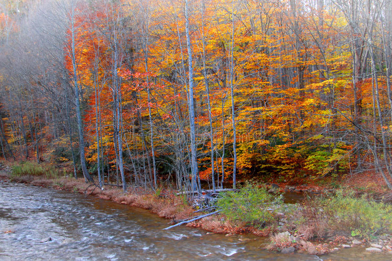 Colorful trees by the river. In late autumn time royalty free stock photography
