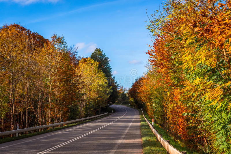 Colorful trees by a road. In the autumn stock images