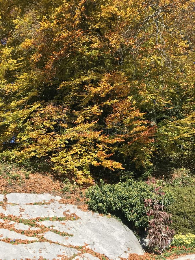 Colorful trees in summer close to autumn season. Yellow orange leaves royalty free stock photo