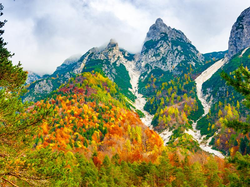 Colorful trees in Val Dogna. View of the forest under Jof di Montasio in autumnal colors in Julian Alps, Val Dogna, Friuli Venezia Giulia, Italy royalty free stock images