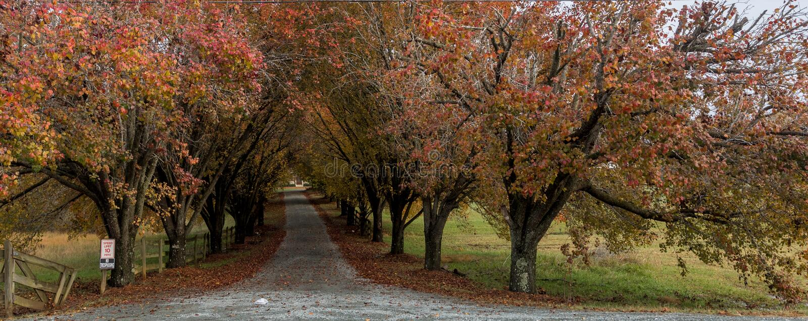 Colorful trees lining coutry lane. Colorful trees and wooden fence lining coutry lane royalty free stock photography